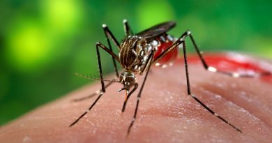 Zika virus disease