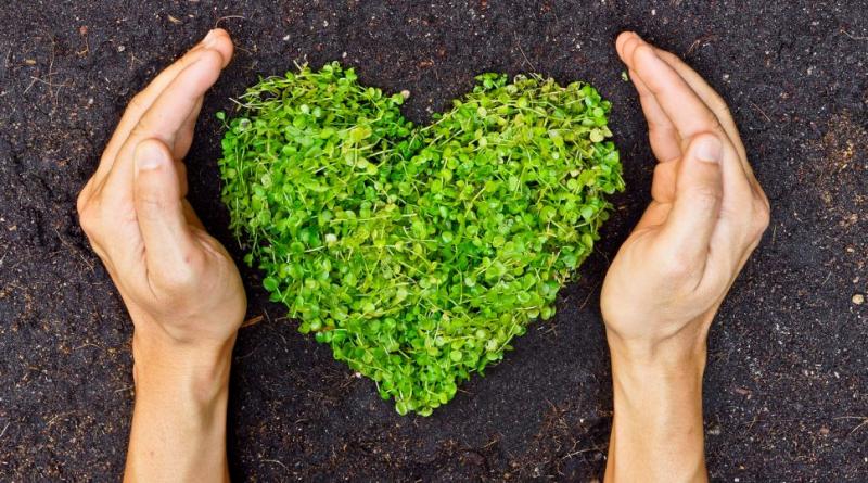 The Power of Green Habit